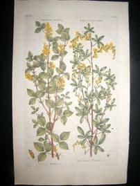 Hill C1760 Folio Hand Col Botanical Print. Crotalaria Rattlewort 13