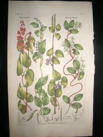 Hill C1760 Folio Hand Col Botanical Print. Dolichos Beanwort 21