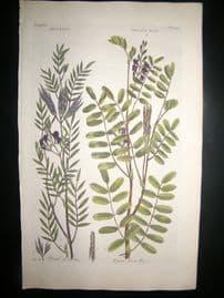 Hill C1760 Folio Hand Col Botanical Print. Galega Goats Rue 56