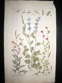 Hill C1760 Folio Hand Col Botanical Print. Hedysarum Edysare 31