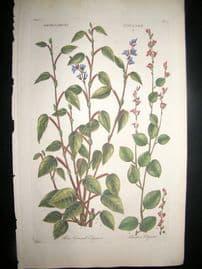 Hill C1760 Folio Hand Col Botanical Print. Hedysarum Edysare 34