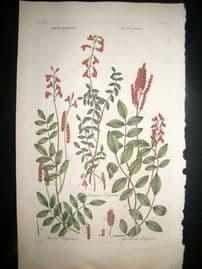 Hill C1760 Folio Hand Col Botanical Print. Hedysarum Edysare 41
