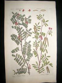 Hill C1760 Folio Hand Col Botanical Print. Indigofera Indigo 45
