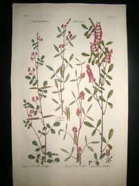 Hill C1760 Folio Hand Col Botanical Print. Indigofera Indigo 46
