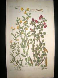 Hill C1760 Folio Hand Col Botanical Print. Lote Lotus 48
