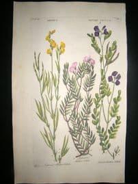 Hill C1760 Folio Hand Col Botanical Print. Orobus Bitter Vetch 59