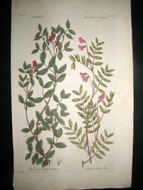 Hill C1760 Folio Hand Col Botanical Print. Orobus Bitter Vetch 60