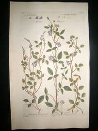 Hill C1760 Folio Hand Col Botanical Print. Psoralea Strong Weed 17