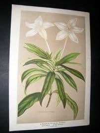 L'Illustration Horticole 1871 Botanical Print. Lindenia Rivalis