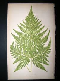 Lowe Fern 1860 Antique Botanical Print. Aspidium Recedens