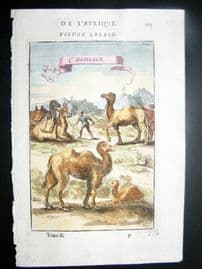 Mallet 1683 Antique Hand Col Print. Camels, Morocco