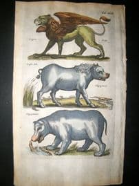 Merian & Jonston C1660 Folio Hand Col Print. Griffin, Hippopotamus