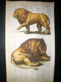 Merian & Jonston C1660 Folio Hand Col Print. Lion
