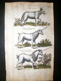 Merian & Jonston C1660 Folio Hand Col Print. Unicorn
