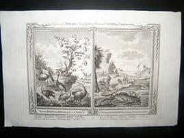 Millar 1782 Folio Antique Print. Birds of the World. Fish of Sierra Leone
