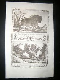 Millar 1782 Folio Antique Print. Buffalo & Lions of Africa