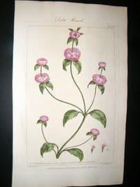 Miller 1760 Folio Hand Col Botanical Print. Field Basil 95