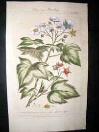 Miller 1760 Folio Hand Col Botanical Print. Flowering Rasberry Fruit