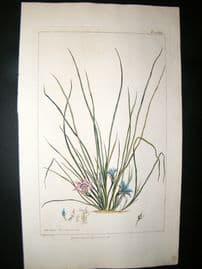 Miller 1809 Folio Hand Col Botanical Print. Ixia Rosea 240