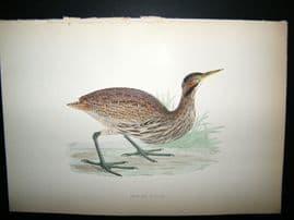 Morris 1870 Antique Hand Col Bird Print. American Bittern