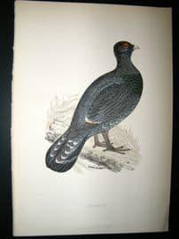 Morris 1870 Antique Hand Col Bird Print. Capercaillie