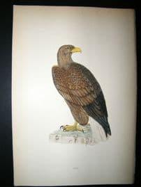 Morris 1870 Antique Hand Col Bird Print. Erne