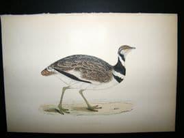 Morris 1870 Antique Hand Col Bird Print. Little Bustard