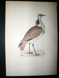 Morris 1870 Antique Hand Col Bird Print. Macqueens Bustard