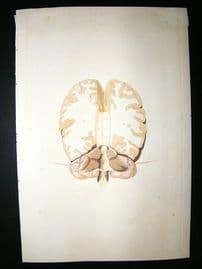 Anatomy Print 1826 Anatomical Art. Folio Hand Col.