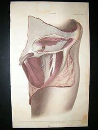 Anatomy Print 1826 Folio Hand Col Lizars Engraving