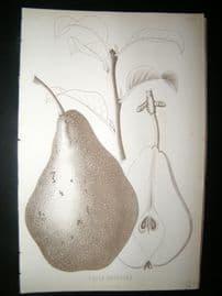 Pomologie de La France C1865 Fruit Print. Belle Angevine, Pear 126