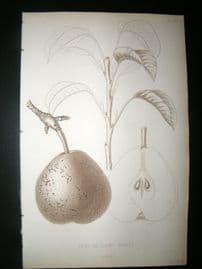 Pomologie de La France C1865 Fruit Print. Besy de Saint Waast, Pear 67