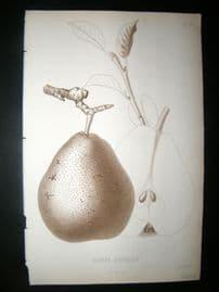 Pomologie de La France C1865 Fruit Print. Beurre Bachelier, Pear 49