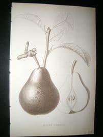 Pomologie de La France C1865 Fruit Print. Beurre d'Amanlis, Pear 39