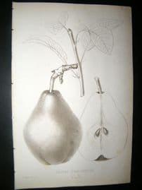 Pomologie de La France C1865 Fruit Print. Beurre d'Hardenpont, Pear 12