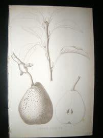 Pomologie de La France C1865 Fruit Print. Beurre Delfosse, Pear 131