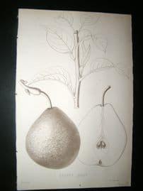 Pomologie de La France C1865 Fruit Print. Beurre Dilly, Pear 171