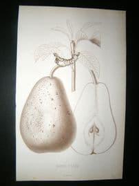 Pomologie de La France C1865 Fruit Print. Bonne d'Ezee, Pear 34