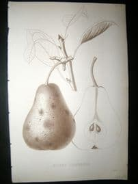 Pomologie de La France C1865 Fruit Print. Bouvier Bourgmestre, Pear 36