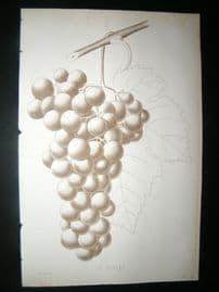 Pomologie de La France C1865 Fruit Print. C. Violet, Grapes 6