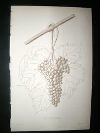 Pomologie de La France C1865 Fruit Print. Corinthe Blanc, Grapes 25