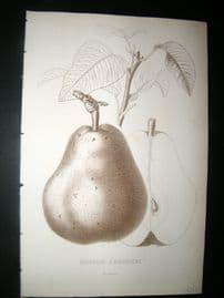 Pomologie de La France C1865 Fruit Print. Duchesse d'Angouleme, Pear 17