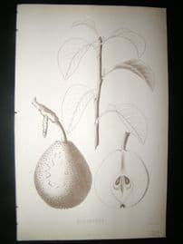 Pomologie de La France C1865 Fruit Print. Echassery, Pear 121