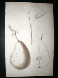 Pomologie de La France C1865 Fruit Print. Esperine, Pear 145