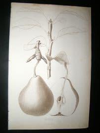 Pomologie de La France C1865 Fruit Print. Howel, Pear 105