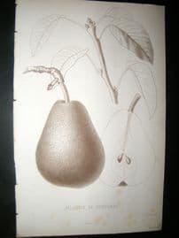 Pomologie de La France C1865 Fruit Print. Jalousie de Fontenay, Pear 44