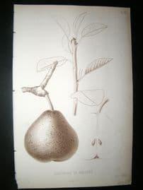 Pomologie de La France C1865 Fruit Print. Josephine de Malines, Pear 50