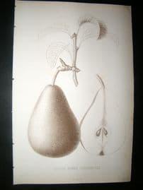 Pomologie de La France C1865 Fruit Print. Louise Bonne d'Avranches, Pear 21