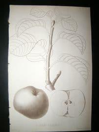 Pomologie de La France C1865 Fruit Print. P. Champ Gaillard, Apple 67