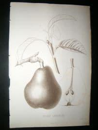 Pomologie de La France C1865 Fruit Print. Soldat Laboureur, Pear 42